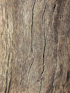 Texture tronco - wood - madera by sangrenegrv Old Wood Texture, 3d Texture, Wooden Textures, Wood Patterns, Textures Patterns, Backgrounds Wallpapers, Rustic Wedding Bands, Wood Bark, Into The Woods