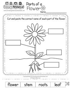 Easily print a free parts of a flower worksheet directly from your browser. Your kids can start using this kindergarten phonics worksheet right away. Christmas Worksheets Kindergarten, Coloring Worksheets For Kindergarten, Shapes Worksheet Kindergarten, Thanksgiving Worksheets, Science Worksheets, Kindergarten Science, Plant Life Cycle Worksheet, Parts Of A Flower, Spring Crafts