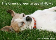 Every dog deserves a home of their very own. #rescue #NationalMillDogRescue