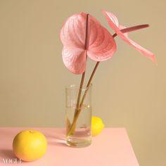 plastic pastel Art And Craft Design, Still Life Photos, Photography Illustration, Spring Art, Fashion Photography, Editorial, Arts And Crafts, Pastel, Vogue