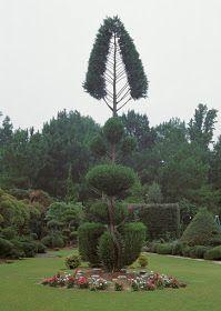 Trees Planet: Cupressocyparis leylandii - Leyland Cypress Leylandii Hedge, Monterey Cypress, Topiary Garden, Vascular Plant, Evergreen Trees, Ornamental Plants, Planting Seeds, Hedges, Horticulture