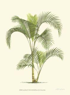 Coastal Palm IV Print - at AllPosters.com.au