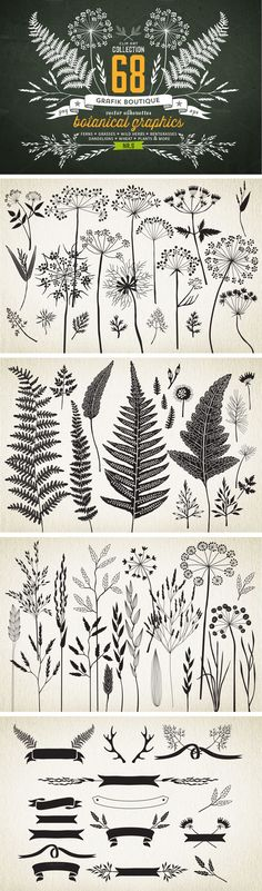 Botanical element illustrations... *IDEA* try printing to give a sense of surroundings? or layering in lively scrapbook format? #Woodburning