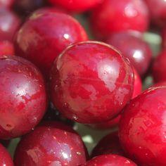 Neu! Mirabelle Rote Werderaner (Pflanze)