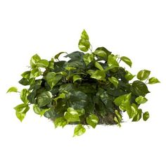 "$39.99, 15"" x 24"" x 13"" - Pothos Vine Window Ledge Plant - 15"