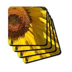 Life of a Sunflower Flowers Flower Photography - Coasters