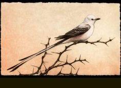 scissortail flycatcher | ... Paintings & Photography >> Scissortail | Sporting Art & Wildlife Art