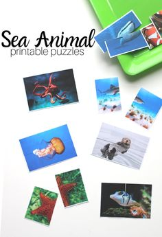 under the sea preschool theme. FREE printable puzzles for preschool. under the sea preschool theme. FREE printable puzzles for preschool. Free Printable Puzzles, Ocean Animal Crafts, Sea Activities, Under The Sea Theme, Ocean Themes, Homeschool, Preschool Curriculum, Preschool Classroom, Preschool Learning