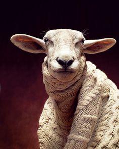 Das Schaf Elfriede produziert im Jahr zwischen drei und sechs Kilo Wolle. Das hätte auch locker für sechs Capes gereicht. Cape: Gant.