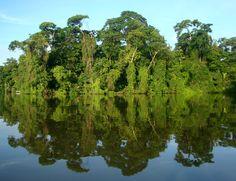 Mirrored trees. Costa Rica.