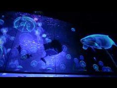 冬の京都水族館 その1~3Dプロジェクションマッピング - YouTube Interactive Projection, Virtual Studio, Stage Design, Multimedia, Aquarium, Pets, Animals, Technology, Youtube