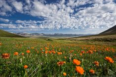 Steppe Beautiful Landscape Pictures, Beautiful Scenery, Beautiful Landscapes, Golden Horde, Silk Road, Art And Architecture, Austria, Mongolia, Nature Photography