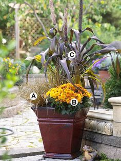 Deep, dark purples create garden intrigue, especially when they're paired with a bold, bright color. Create contrast for a stunning fall show.  A. Leatherleaf sedge (Carex buchananii): 2  B. Chrysanthemum 'Golden Andrea': 1  C. Purple millet (Pennisetum 'Jester'): 3