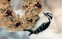 This homemade recipe helps birds through the cold months—plus it can be a heartfelt gift for any bird lover.