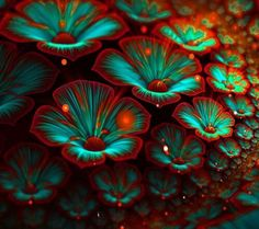 Turquoise Flower Fractals | Turquoise Fractal