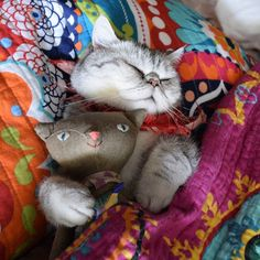 goodnight!  #exoticshorthair #cat #cute #flatface #meow #mreggs #catlover #exoticsofinstagram #smushface #pizzaparty #churrosquirrel #pizzacatapp #spacecats #pugmob #pizzacat