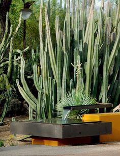 Garden in Phoenix, Arizona designed by Steve Martino Landscape Architect