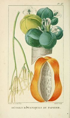 n363_w1150 by BioDivLibrary, via Flickr