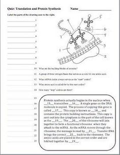 Protein Synthesis Worksheet Exercises KEY.2.png | Transcription ...