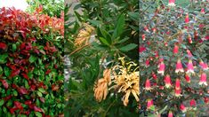 6 native plants that thrive in winter is part of Winter garden Australia - Add some colour to your garden in the cooler months with these winter loving plants Winter Plants, Winter Flowers, Winter Garden, Spring Flowers, Most Beautiful Gardens, Beautiful Flowers, Fast Growing Trees, Australian Garden, Garden Pests