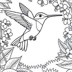 Hummingbird Pictures To Print For Free Hummingbird Coloring - images of hummingbird coloring pages
