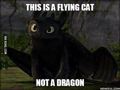A big book of fun Httyd memes! What Httyd fan doesn't want that? Toothless And Stitch, Toothless Dragon, Hiccup And Toothless, Toothless Funny, Toothless Tattoo, Dragon 2, Dragon Rider, Httyd, Dreamworks Dragons