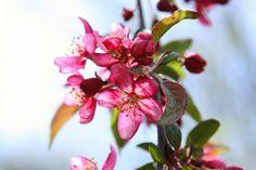 spring - photo by: jessika gosen