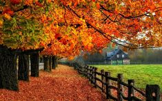 When you feel the crisp breeze, you know that there is no more summer, and fall is here.