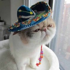 Funny Animal Pictures - View our collection of cute and funny pet videos and pics. New funny animal pictures and videos submitted daily. Funny Cat Memes, Funny Animal Videos, Funny Animal Pictures, Funny Cats, Funny Animals, Cute Animals, Happy Animals, Hilarious, Mariachi Hat