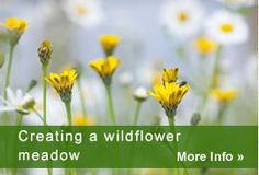 Creating a wildflower meadow lindum