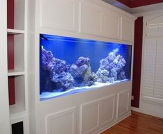 Home Aquarium Ideas - Complete Kits vs Individual Components - What is Better? White Aquarium Stand/Cabinet Unit - contemporary - furniture - kansas city - by Belak Woodworking LLC Aquarium Design, Home Aquarium, Aquarium Fish, Nature Aquarium, 125 Gallon Fish Tank, 75 Gallon Aquarium Stand, 55 Gallon, Fish Tank Wall, Fish Tank Stand