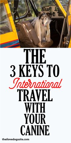 The 3 Keys To International Travel With Your Canine