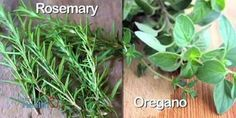 Rosemary And Oregano Lower Blood Sugar And Prevent Diabetes