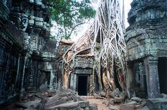 Jungle Temple, Angkor Wat.  One of the most magical places I've seen in person!