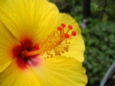 Amarelo 2     -    Yellow 2