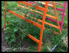 fun funky free garden trellis tomato cage, gardening, homesteading, repurposing upcycling, As the tomatoes grew I simply tied them to the trellis as needed or guided them around the rungs of the pallet For the cucumbers I just wove the tendrils around the pallets as they grew