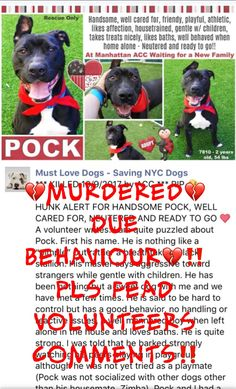 IN LOVING MEMORY❤️ POCK WAS SENSELESSLY MURDERED 10/9/17 DUE HIS BEHAVIOUR!! POCK – 7810 Hello, my name is Pock. My animal id is #7810. I am a desexed male black dog at the Manhattan Animal Care Center. The shelter thinks i am about 2 years 1 weeks old.  http://nycdogs.urgentpodr.org/pock-7810/