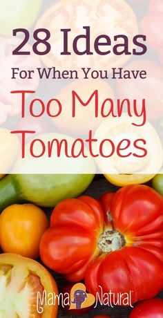 28 Things to Do With Too Many Tomatoes is part of Tomato recipes - Late in the summer, many gardeners end up with too many tomatoes! Here are 28 ways to use all those extra tomatoes from your garden Fresh Tomato Recipes, Vegetable Recipes, Tomato Ideas, Garden Tomato Recipes, Recipes With Fresh Tomatoes, Tomato Canning Recipes, Spinach Recipes, Real Food Recipes, Healthy Recipes