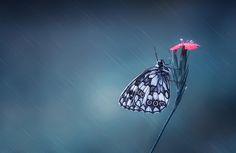 Rain & Butterfly - null
