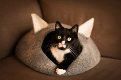 Widescreen Wallpaper: cat