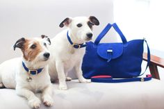 Leather Dog Collar & Lead Royal Thela Medium Royal Blue Nubuck Handbag and matching dog collars in Blue & Fluoro Pink XS/S by Meli Melo www.melimelo.com  Thela Medium Royal Blue Nubuck