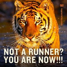 Not a runner? You are now! Today's tiger: your boss, your job, your partner, your mortgage, your... Run it off!