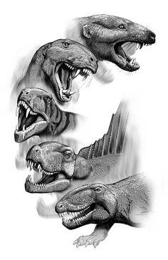 Reptil ----> mamífero. Por Carl Buell