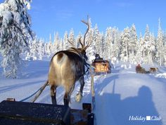 Imagine this... well it's possible in Salla, a destination in the middle of nowhere ;)