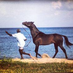 Caribbean Horses, Horse Training, I Love My Horse #HorseColicSymptomsFree http://www.loveyour.horse