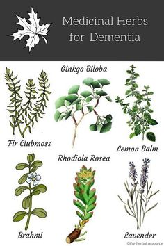 Information on the health benefits, side effects, scientific studies and uses of medicinal herbs as herbal remedies for natural dementia treatment Natural Health Remedies, Natural Cures, Natural Healing, Herbal Remedies, Holistic Remedies, Healing Herbs, Medicinal Plants, Natural Medicine, Herbal Medicine