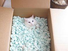 fragile cat.
