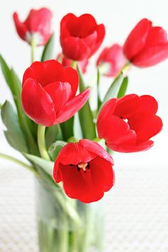 red tulips are beautiful - especially when some are opened already and others are closed. Would these look good with poppies?