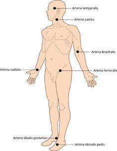 Bild som visar några av de ställen på kroppen där pulsen kan mätas