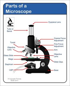 A study of the microscope and its functions with a labeled diagram microscope labeling worksheet google search ccuart Images